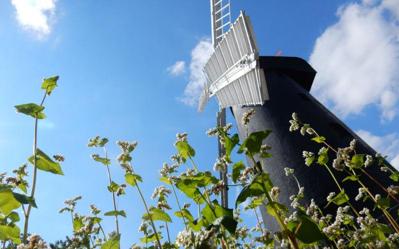 brixton-windmill-loti