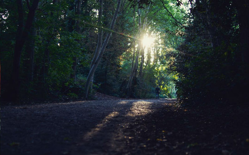 parkland-walk-loti