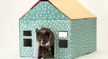 pop-up estate agents for cats