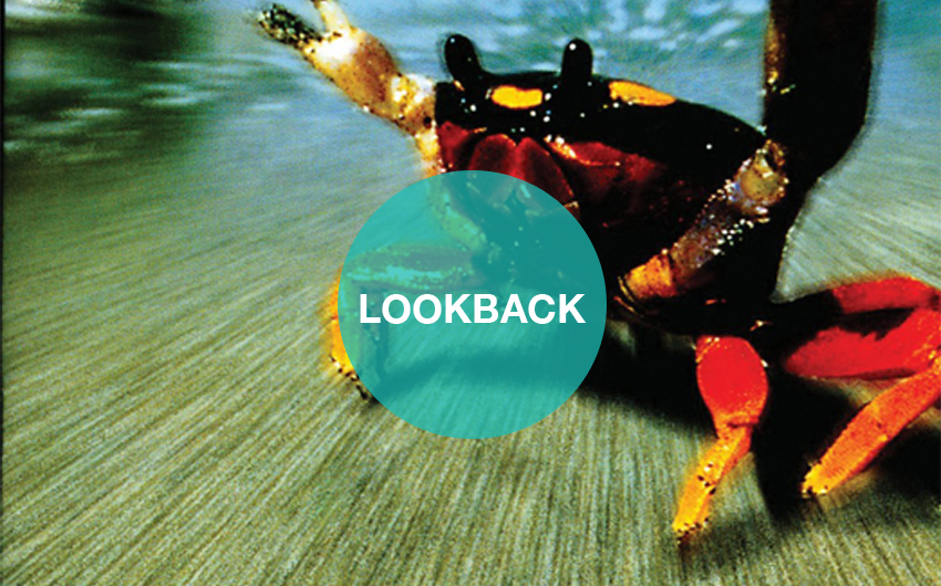 lookback <br> the prodigy | the fat of the land
