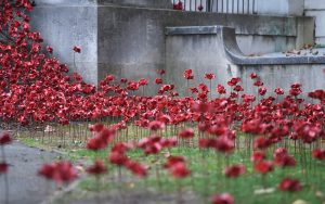 Popies at Weeping Window The Imperial War Museum