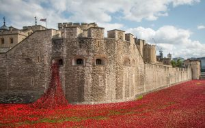 the tower of london poppies are coming back